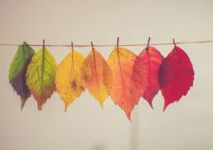 maison en automne espace pergola